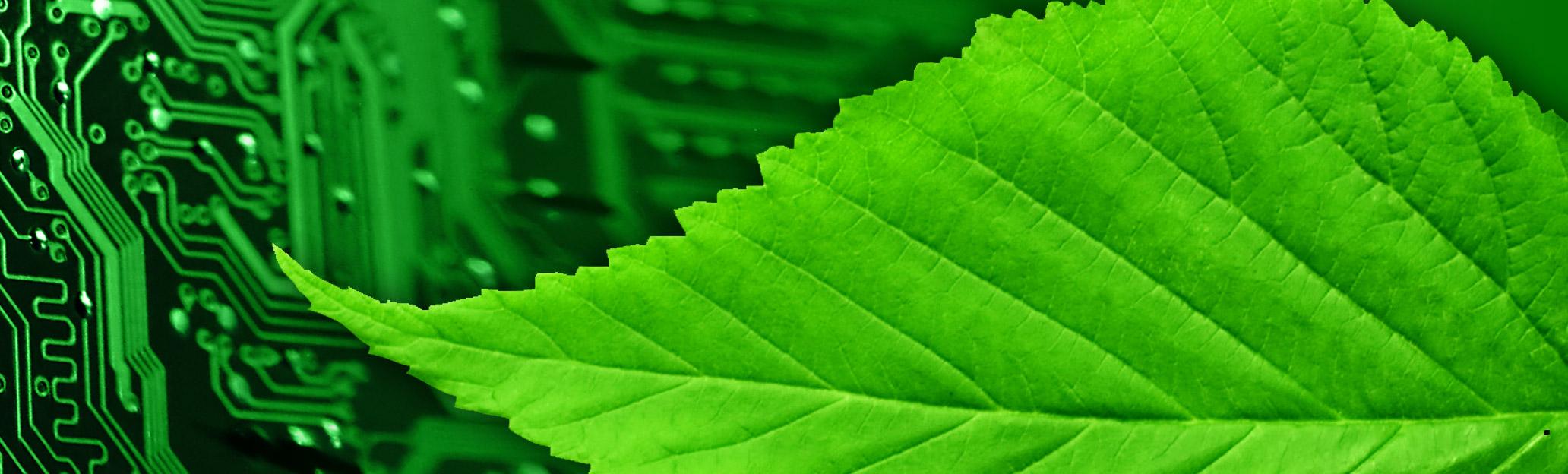 eco leaf