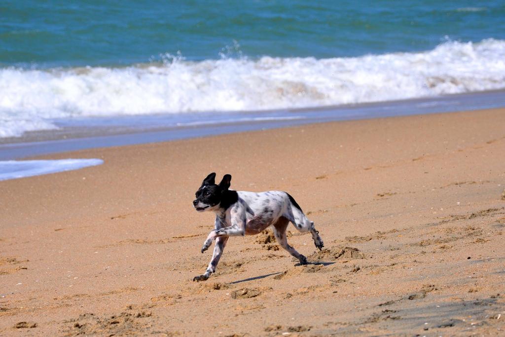 Vacanza con il cane mare