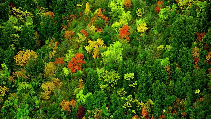 Spoleto, Autumn, Maury Landsman