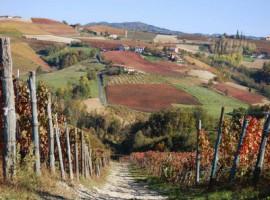 Autunno nelle vigne