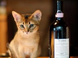Il gatto ed il barolo
