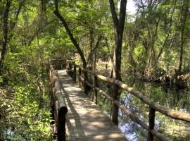 camminare nel Parco di San Rossore fino al mare