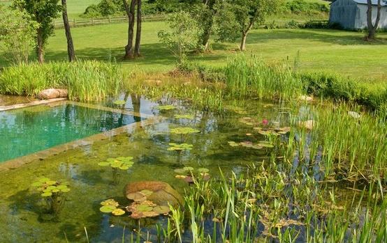 bio-piscine e biolaghi in Italia