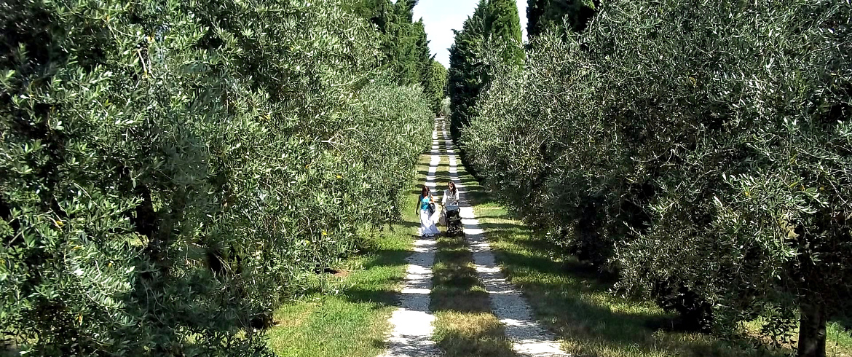 Gli uliveti del lago di Garda, da cui si produce uno degli oli DOP più pregiati del nord Italia, foto di Luigi Granata, via flickr