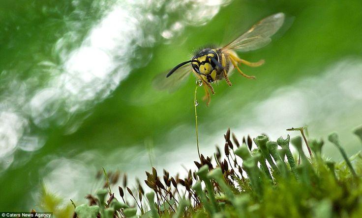 No pesticidi, l'importanza delle api