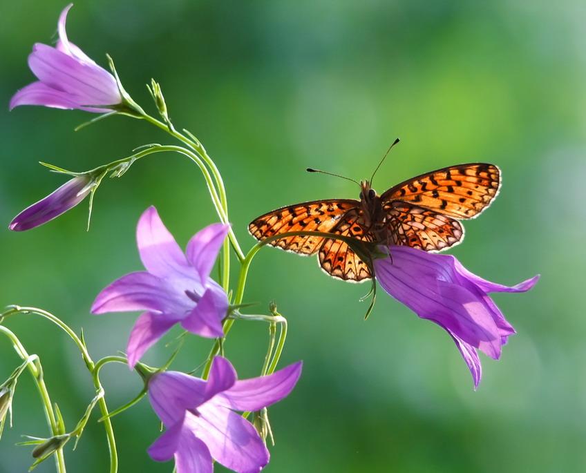 No pesticidi, l'importanza degli insetti