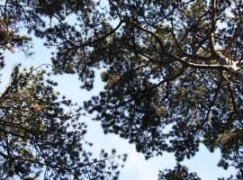 Baroni tra alberi, il cielo visto dalla Tenda sospesa tra gli alberi