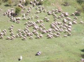 pecore all'agriturismo Valle Scannese Abruzzo