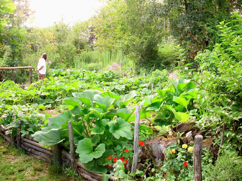 permacutura, agricoltura biologica, senza pesticidi