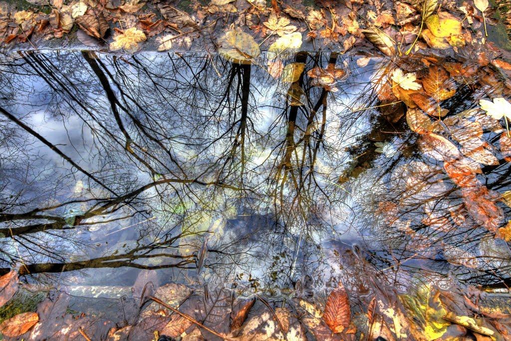 Foliage d'autunno nella valle del Mis