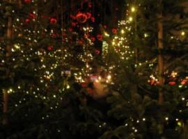 """Allestimento """"Bosco incantato"""" al mercatino di Natale di Bolzano"""