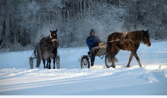 cavallo e slitta sulla neve