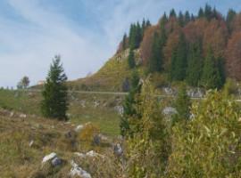 Campi e alberi sul Montegrappa