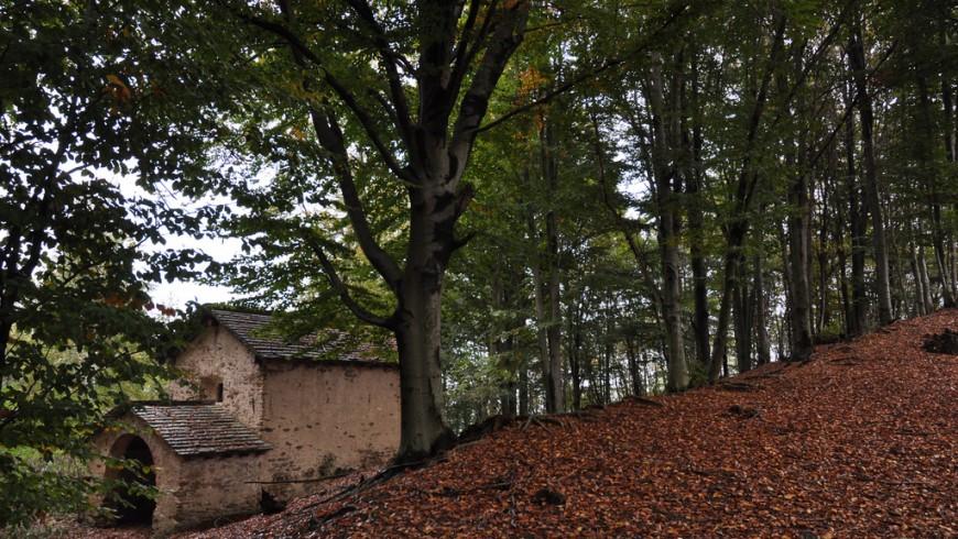 boschi della Valsesia: alberi, foglie e un'antica casa