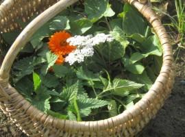 I fiori e le erbe dell'orto biologico di Casa Essenia