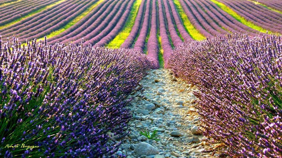 I colori della Lavanda in Provenza, Francia, foto di BORGHY52, via flickr