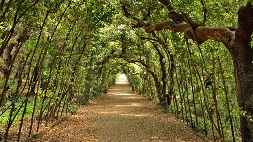 Galleria formata dalle piante nei Giardini di Boboli a Firenze