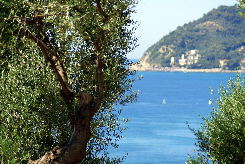Verde e mare della costa ligure, Diano Marina