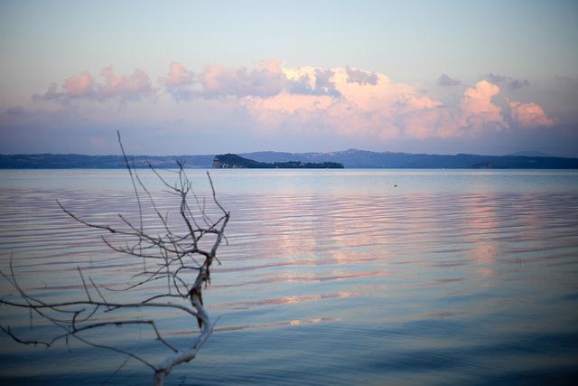 Un ramo spunta dal lago di Bolsena; sullo sfondosi intravede un'isoletta al centro del lago