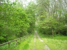 Itinerario verde