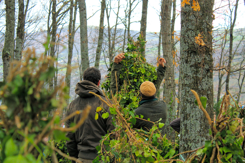 Natura, verde e bosco protagonisti al Carnevale di Satriano, Lucania