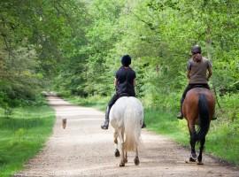 a cavallo nel parco della golena del po