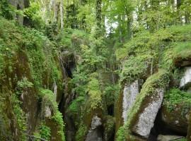 Verde e boschi magigi de La Verna, Casentino, Toscana