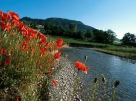 Parco dello Stirone in primavera, papaveri rossi lungo il Torrente