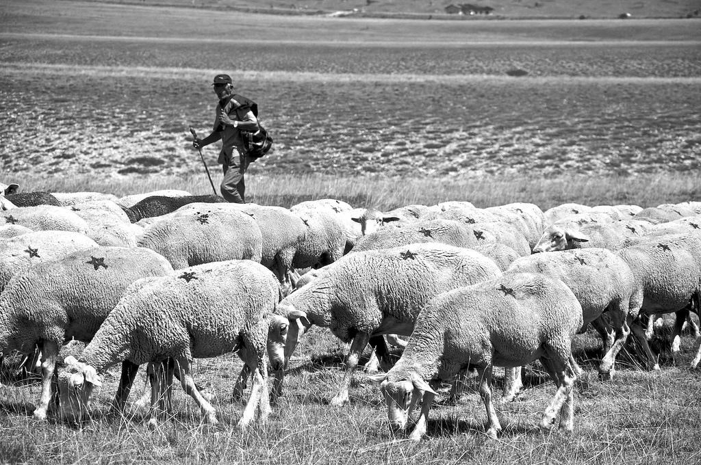centocinquanta pecore nere