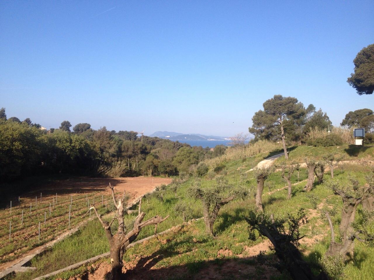 Azienda vinicola La Navicella, parco naturale di Port-Cros, Francia