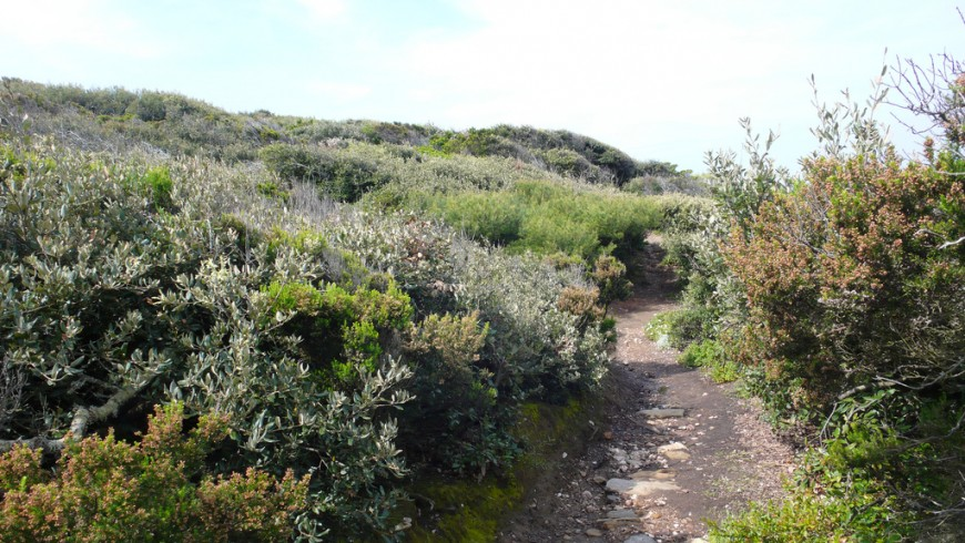 Parco Naturale di Port-Cros