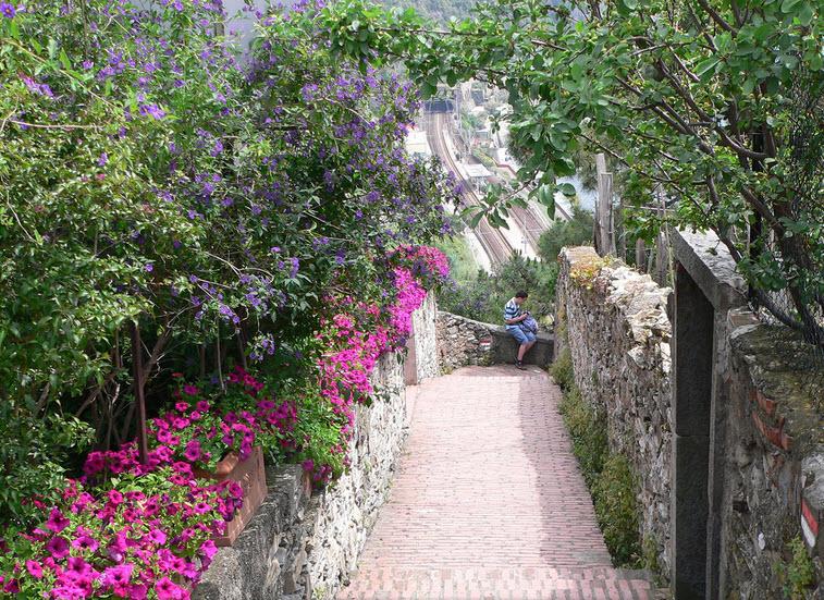 Percorsi tra i fiori attorno a Corniglia, Cinque Terre