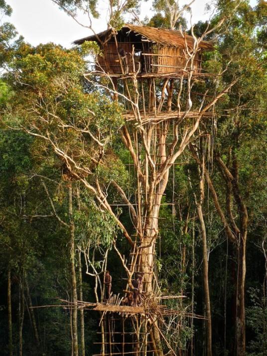 casa sugli alberi della tribù di Korowai