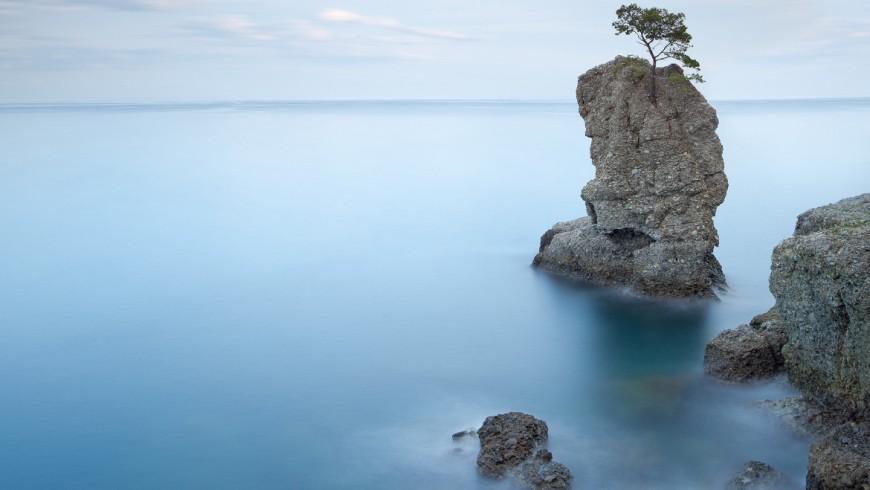 Parco Naturale di Portofino, Pino su una roccia e costa rocciosa