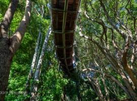 Percorso tra gli alberi a Capetown