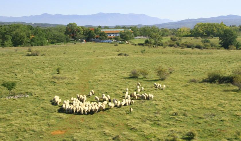 Agricampeggio Parco-Rurale Alture di Polazzo, Gorizia