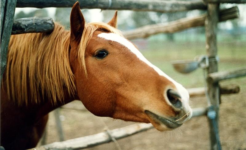 cavallo in agri-campeggio
