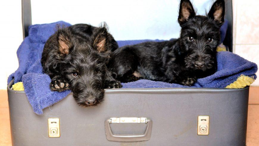 riutilizzare una vecchia valigia per creare una cuccia per cani