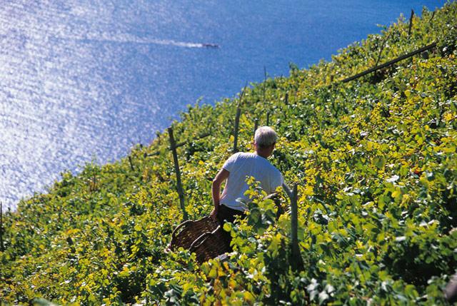 vigneti di sciacchetra sul mare, vino tipico delle cinque terre