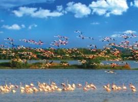 I fenicotteri del Parco del Delta del Po