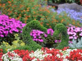 i colori dei fiori a Villa Carlotta, Lombardia