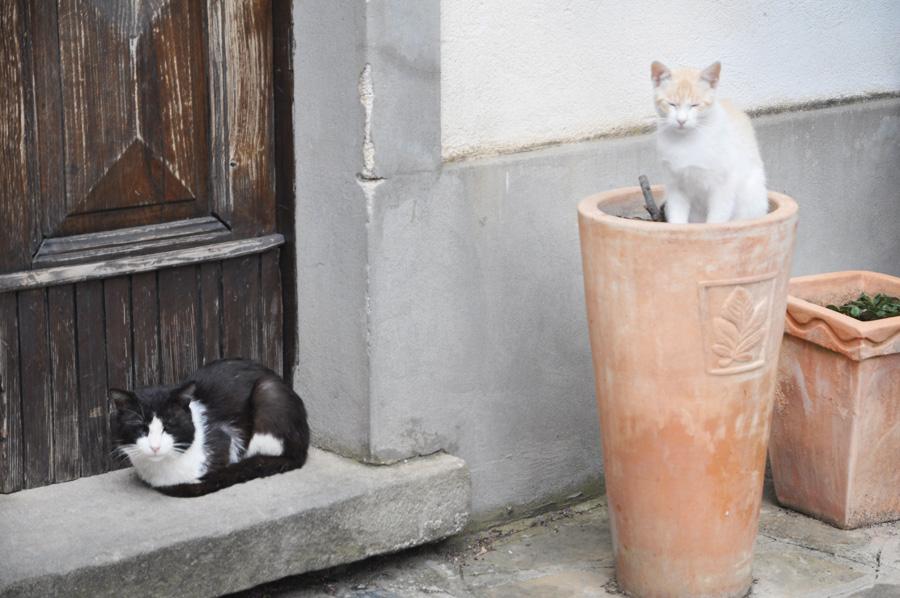 gatto assopito, Residence Ancora, Acciaroli, Salerno