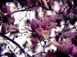 fiore ai giardini pubblici idro montanelli, Milano
