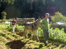 l'orto biologico dell'Ecovillaggio di Torri Superiori