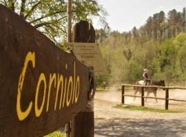 Cavallo nell'Agriturismo Il Corniolo, Garfagnana, Toscana
