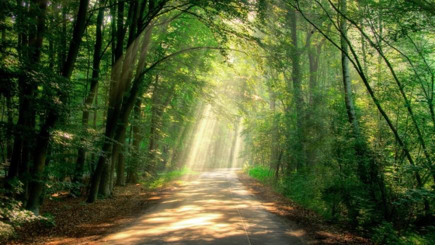 I boschi del Monte Amiata