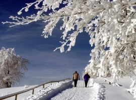 La neve della Foresta Nera