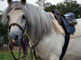 Un cavallo dell'agriturismo Il Rovero