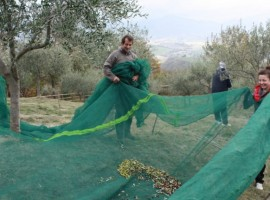 Agriturismo Villa Dama, vacanza in fattoria in Umbria