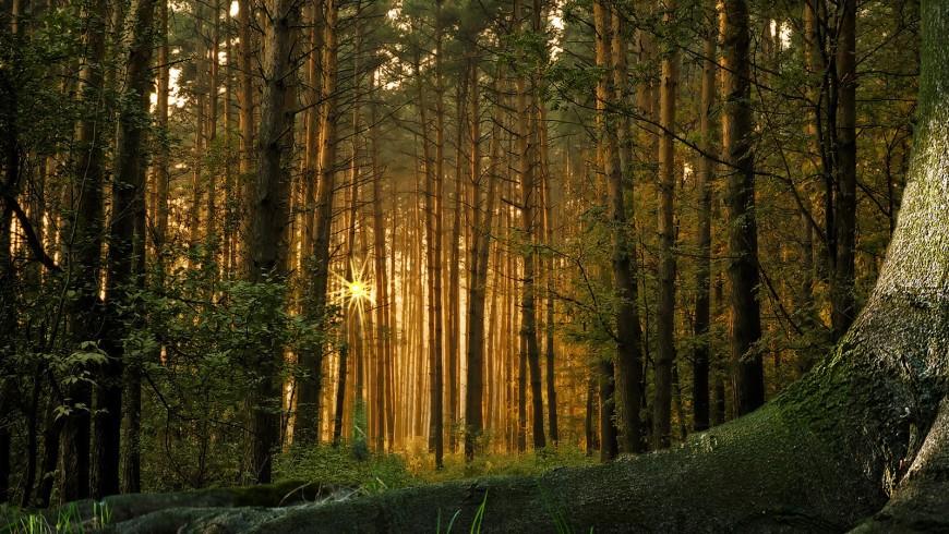 glia alberi pensano